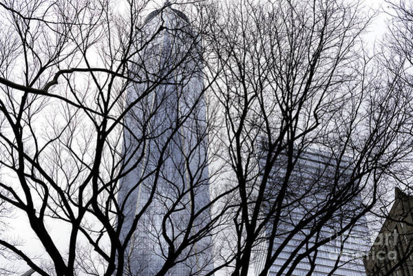 Wall Art - Photograph - Freedom Tower Through The Trees by John Rizzuto