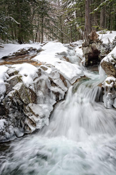 Photograph - Freeze On The Basin Trail Nh by Michael Hubley