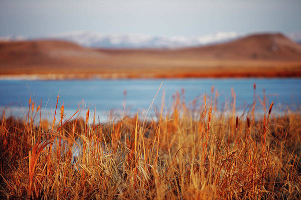 Photograph - Freezeout Reeds by Todd Klassy