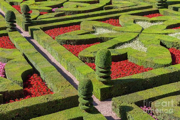 Photograph - French Garden In Formal Patterns  by Heiko Koehrer-Wagner