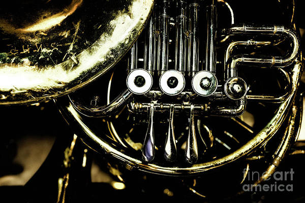 Photograph - French Horn by Miles Whittingham