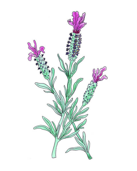 Painting - French Lavender Flower Watercolor by Irina Sztukowski