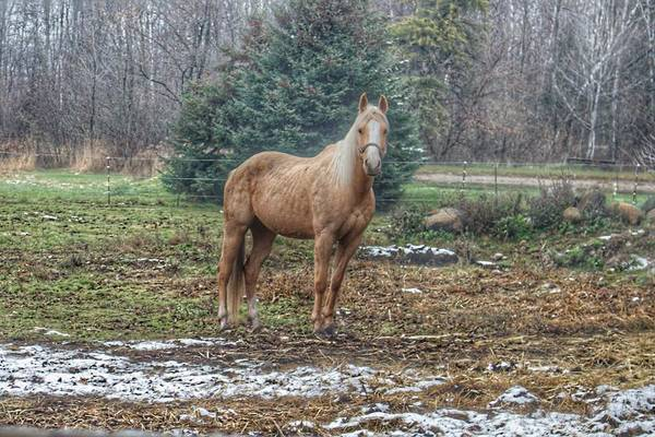 Photograph - 1015 - Frenchline Road Carmel Mare by Sheryl L Sutter