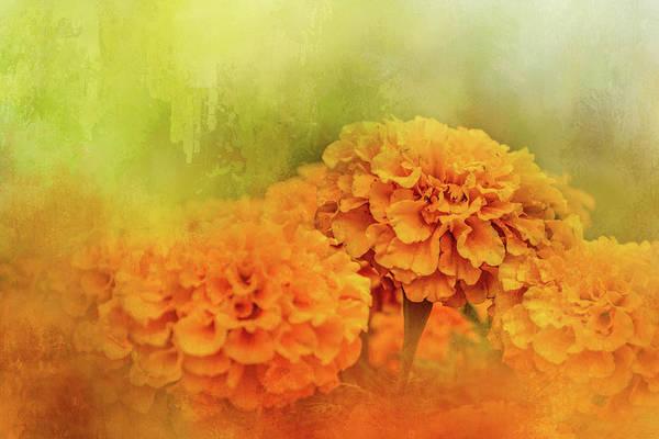 Photograph - Fresh Autumn Flowers by Jai Johnson