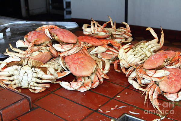 Photograph - Fresh Cooked Crabs At Fishermans Wharf San Francisco California 7d14459 by San Francisco Art and Photography