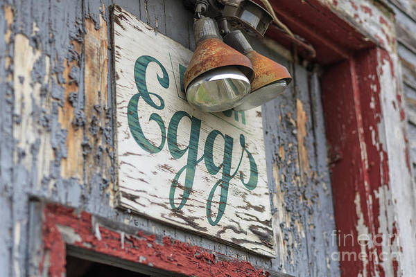 Photograph - Fresh Eggs Sign On An Old Chicken Coop Stowe, Vermont by Edward Fielding
