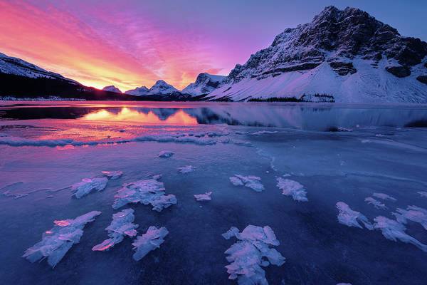 Photograph - Fresh Ice On Bow Lake by Dan Jurak