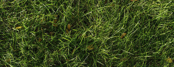 Wall Art - Photograph - Fresh Lawn by Steve Gadomski