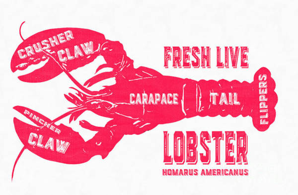 Clawed Photograph - Fresh Live Lobster Vintage Sign by Edward Fielding