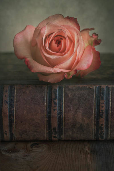 Wall Art - Photograph - Fresh Pastel Pink Rose And An Old Book by Jaroslaw Blaminsky