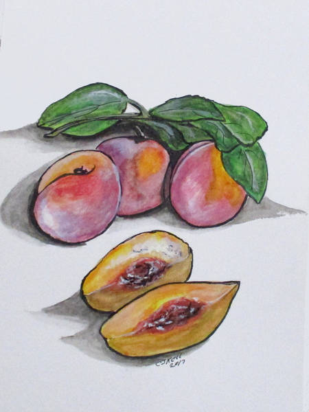 Painting - Fresh Peaches by Clyde J Kell