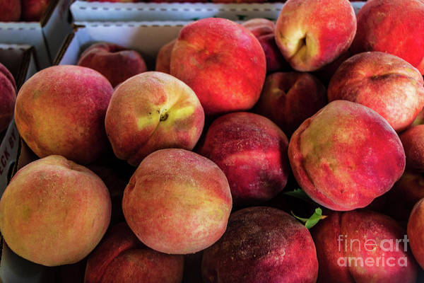 Photograph - Fresh Peaches by Thomas Marchessault