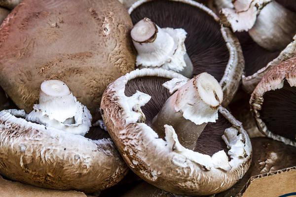 Photograph - Fresh Portabella Mushrooms by Teri Virbickis