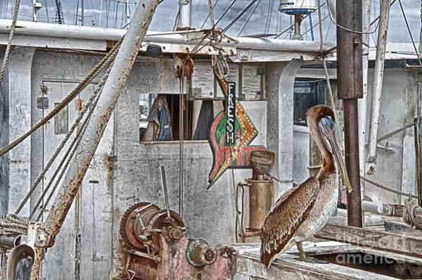Photograph - Fresh Shrimp by Ken Williams