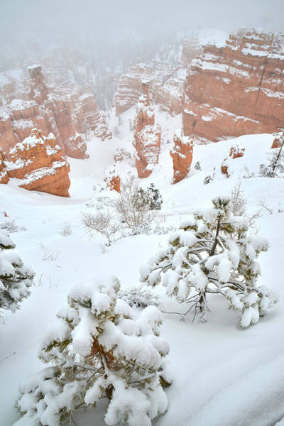 Photograph - Fresh Snow At Bryce Canyon by Ray Mathis