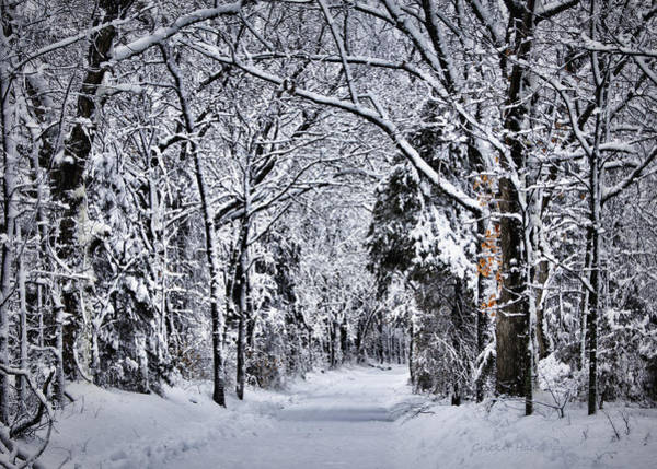 Photograph - Fresh Snow by Cricket Hackmann