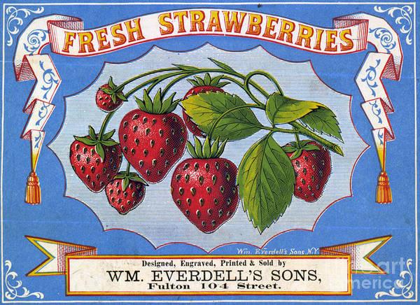 Wall Art - Drawing - Fresh Strawberries Fruit Label by Edward Fielding