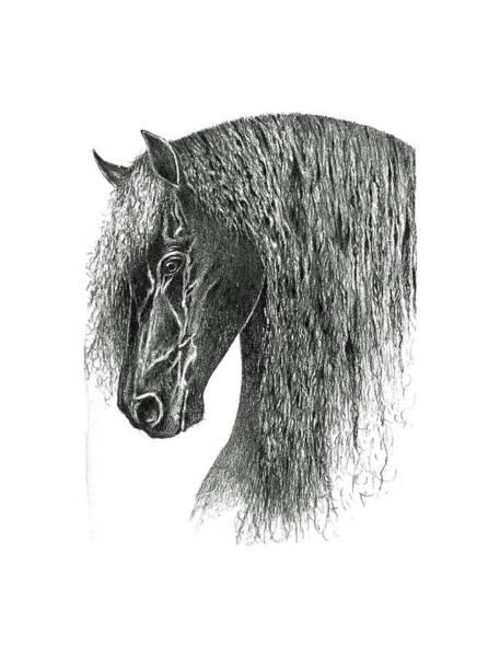 Friesian Drawing - Friesian by John Barnard