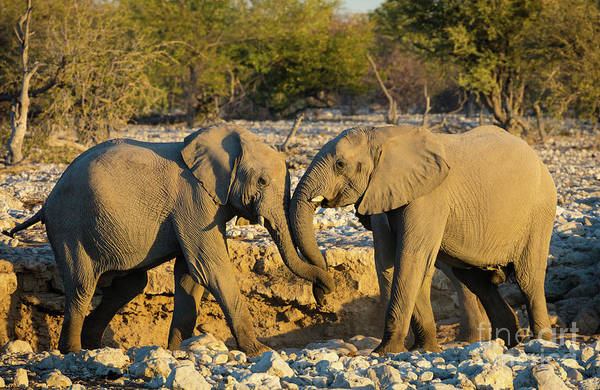 Wildlife Sanctuary Photograph - Friendly Trunks by Inge Johnsson