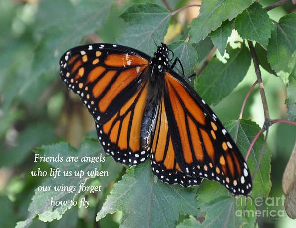 Waterbury Photograph - Friends Are Angels  by Wanda-Lynn Searles