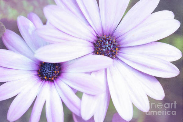Photograph - Friendship by Anita Pollak