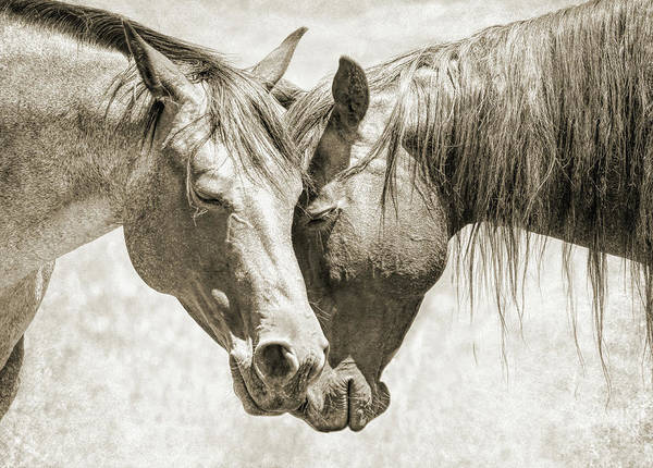 Wall Art - Photograph - Friendship Of Horses Sepia by Jennie Marie Schell