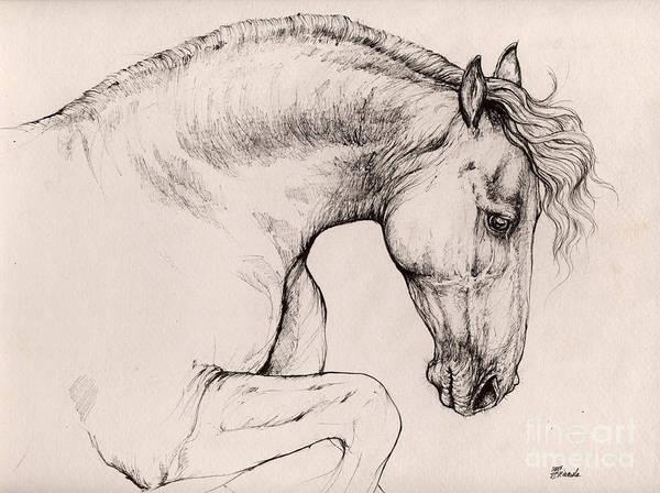 Friesian Drawing - Friesian Horse Drawing 2015 12 10 by Angel Ciesniarska