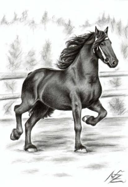 Friesian Drawing - Friesian Horse by Nicole Zeug