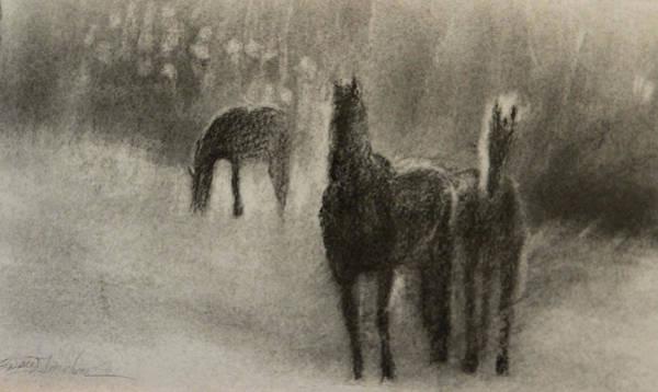 Friesian Drawing - Friesian Mist by Susie Gordon
