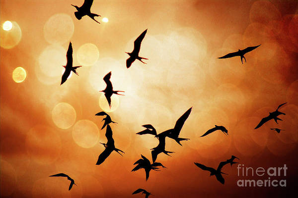 Puerto Plata Photograph - Frigate Birds Over Puerto Lopez by Al Bourassa