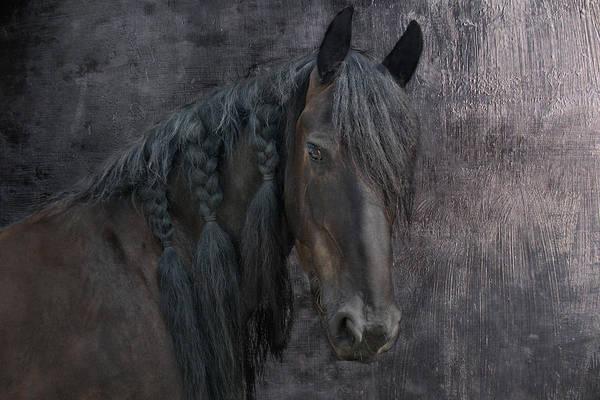 Friesian Horse Photograph - Frisian Girl by Joachim G Pinkawa