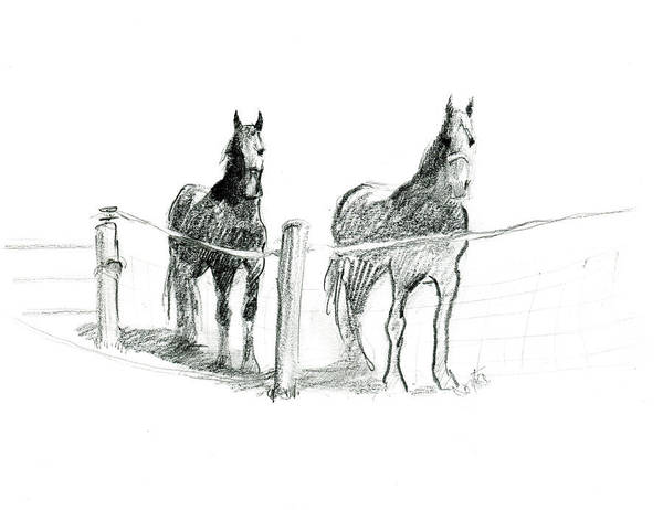 Friesian Horses Art Print