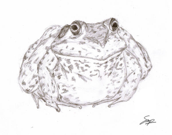 Drawing - Frog 1 by Steven Powers SMP