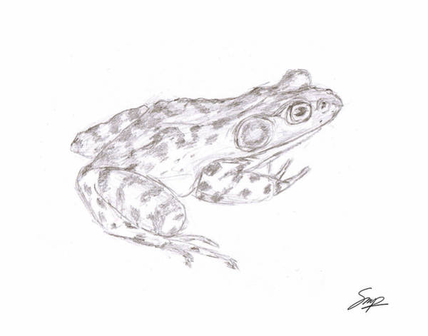 Drawing - Frog 3 by Steven Powers SMP