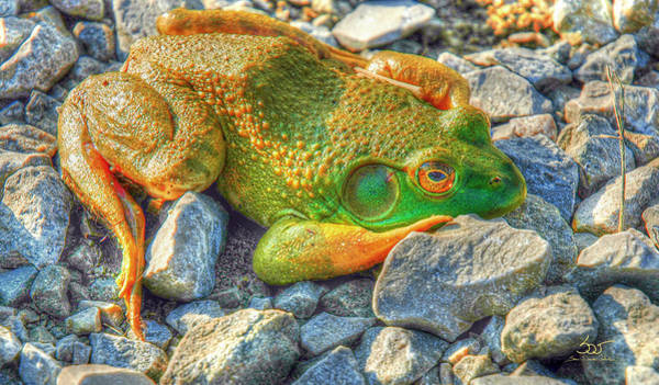 Photograph - Frog 42 by Sam Davis Johnson