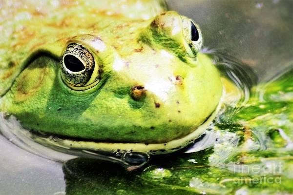 Wall Art - Photograph - Frog Close Up by Nick Gustafson