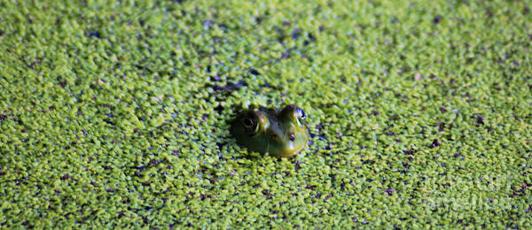 Wall Art - Photograph - Frog In Green by Nick Gustafson