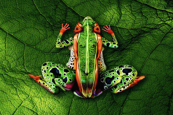 Frogs Photograph - Frog Bodypainting Illusion by Johannes Stoetter