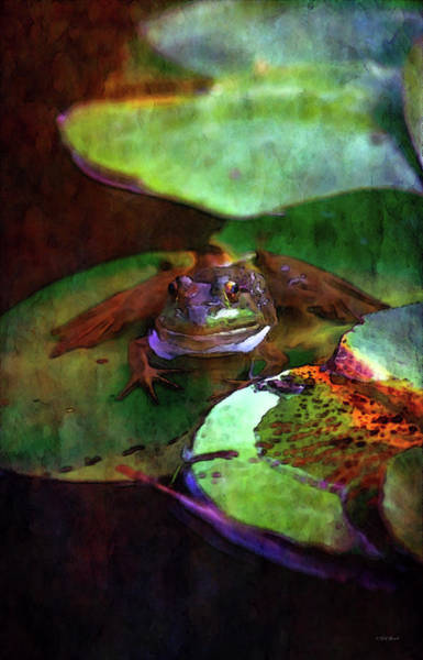 Photograph - Frog On His Lily Pad 3076 Idp_22 by Steven Ward
