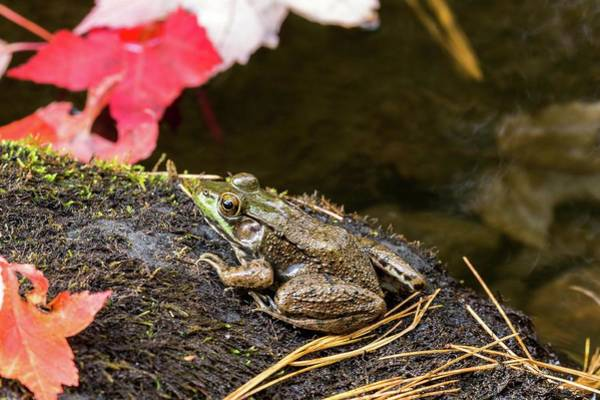 Photograph - Frog by Paul Schultz