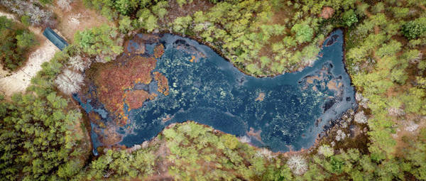 Cachalot Wall Art - Photograph - Frog Pond by Dennis Wilkinson