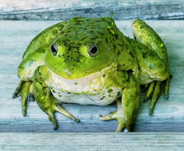 Photograph - Frog Portrait by Edward Peterson