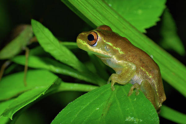 Photograph - Frog With Springtail Friend by Larah McElroy