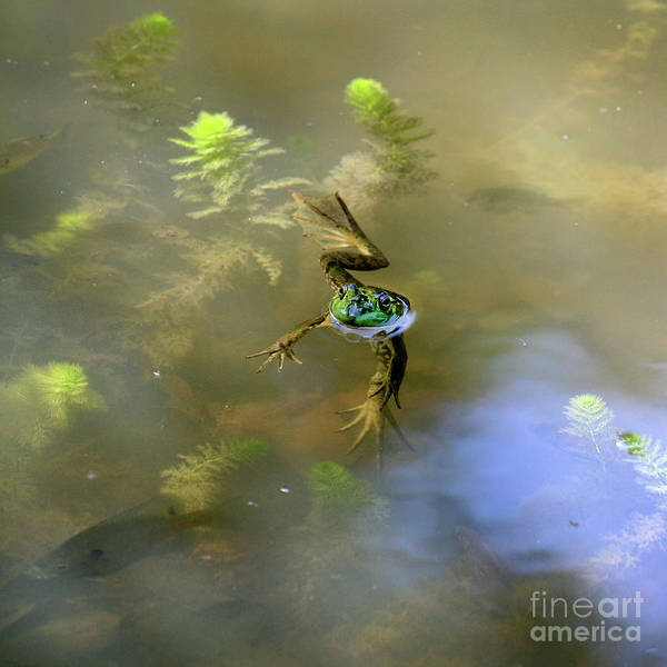 Photograph - Froggy by James Guilford