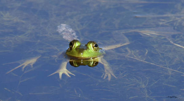 Photograph - Froggy Long Legs by Sally Sperry