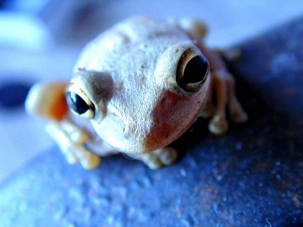 Photograph - Froggy by Paulo Guimaraes