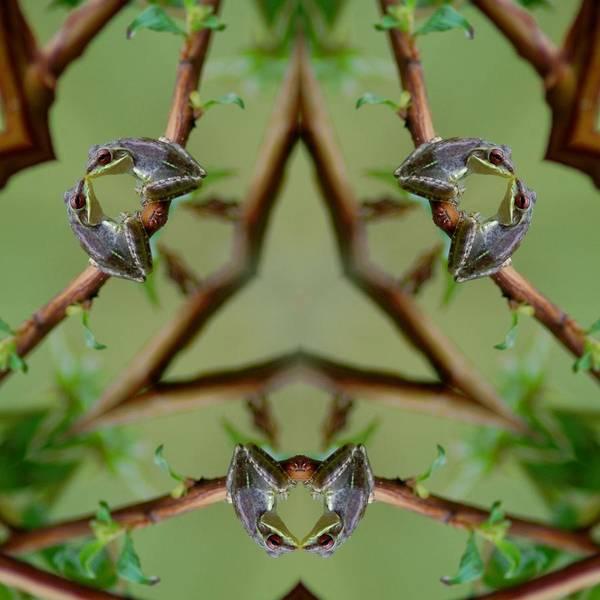 Katrina Digital Art - Frogs Kisses by Katrina Johns