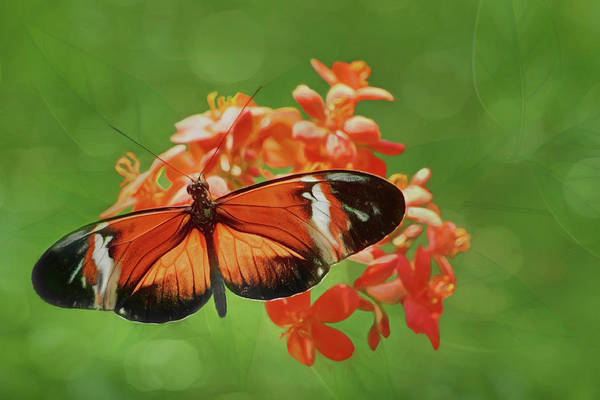Passion Butterfly Photograph - From Above - Butterfly by Nikolyn McDonald