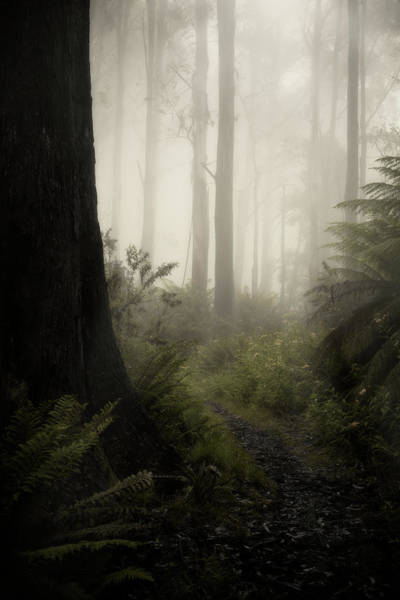 Rain Forest Photograph - From Darkness by Amy Weiss