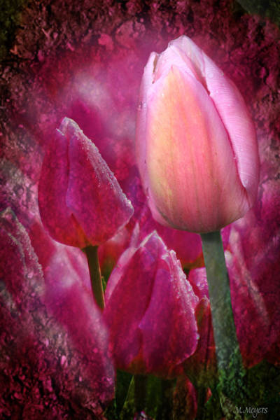Tulips Mixed Media - From The Earth by Melisa Meyers